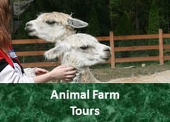 Egg Song Farm Tours!